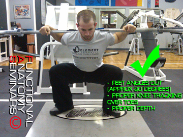 The Adductor Magnus and its role in Squatting: Part II – Issues of ...