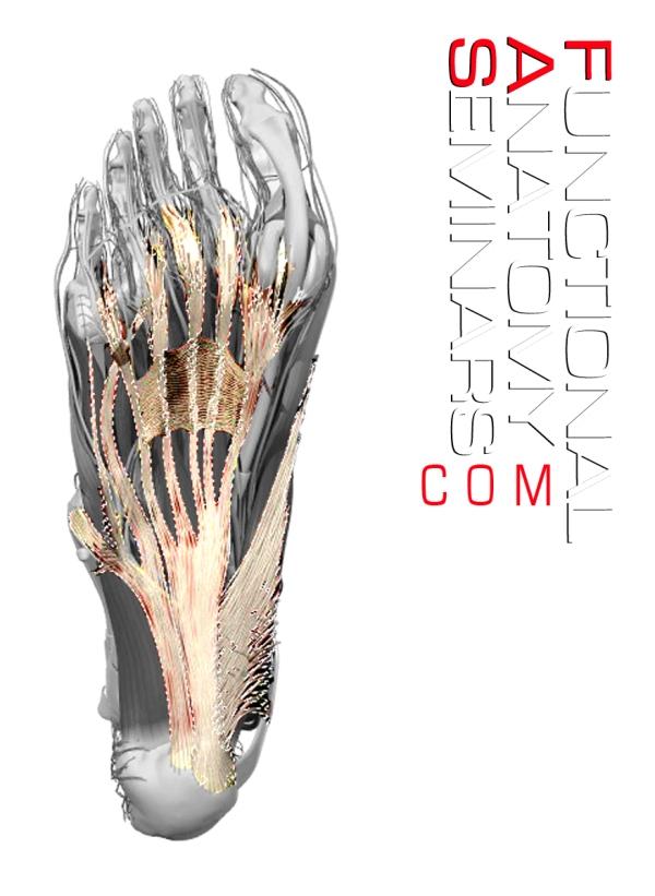 Functional Anatomy Seminars - Functional Anatomic Palpation Systems ...